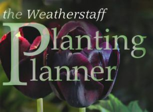 The Weatherstaff Planting-Planner intelligent garden design software for creating tailor-made planting plans for your garden borders